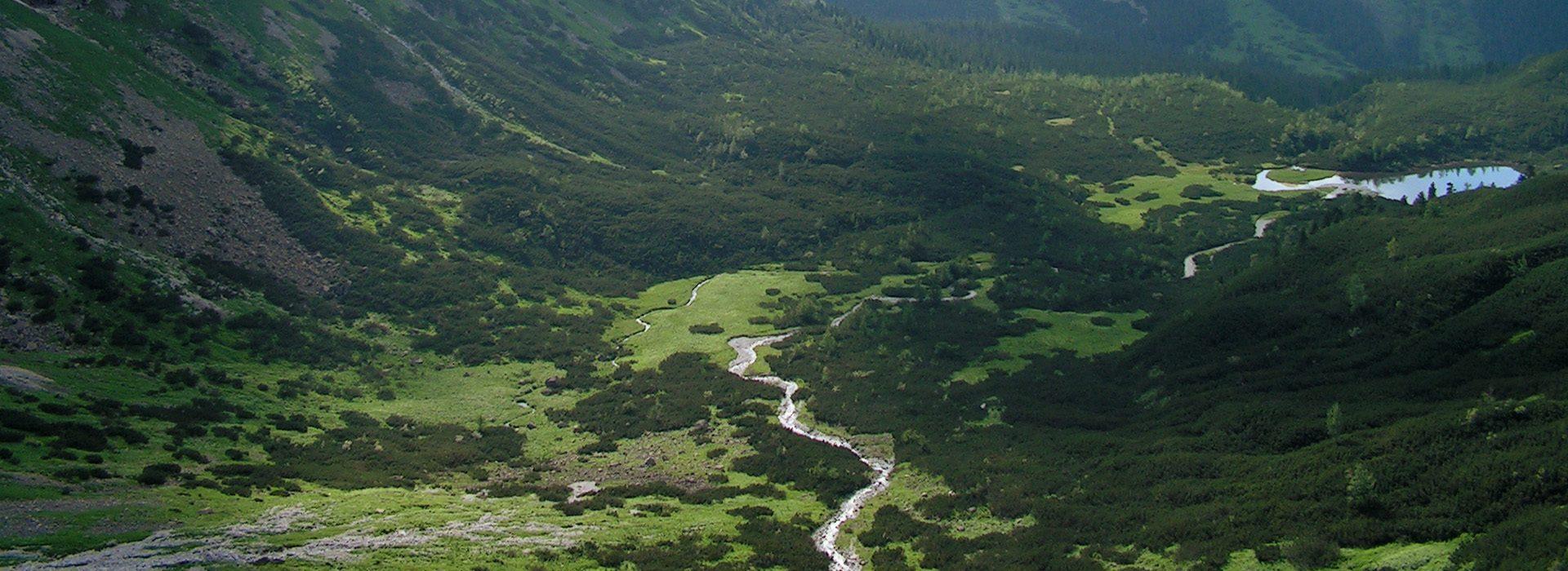 Javorovou dolinou